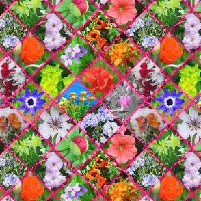 Pink Geometric Photographic Flowers
