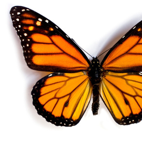 Yard Monarch Butterfly Fabric Panel
