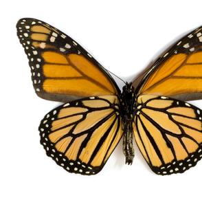 Full Yard Monarch Butterfly Panel