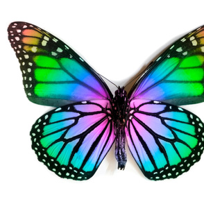 Large Rainbow Monarch Butterfly Wing Panel