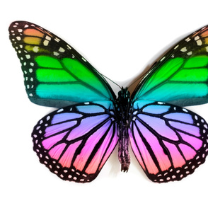 Rainbow Monarch Large Panel