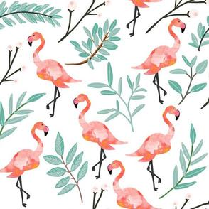Coral Flamingos in Shade