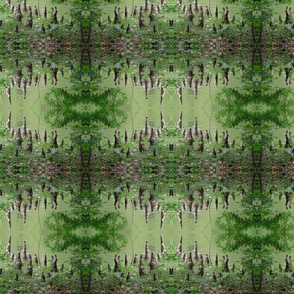 Cypress knees 1