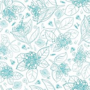 turquoise botanical hydrangea