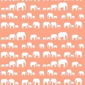 elephantscoralgroup2_copy