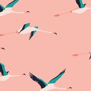 flamingo_coastal