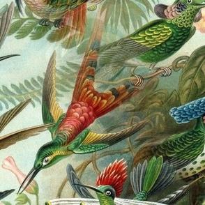 Vintage Hummingbird Pattern (Large)