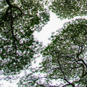 Hawaiien_trees
