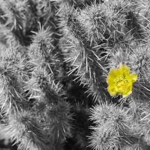 bichromatic blooming cactus
