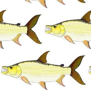 Giant Tigerfish