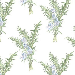 5241111-flowering-rosemary-sprig-by-handdrawndecor