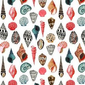 shell // shells seashell ocean nautical summer kids ocean creature