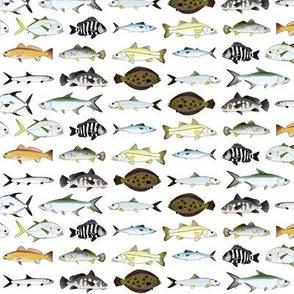 Florida Inshore Fishes 2 row