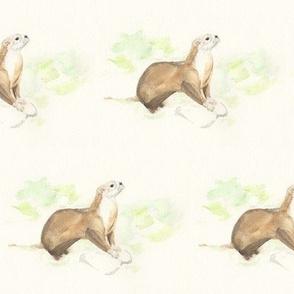 Allen the Otter