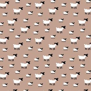 Sheep on Biege