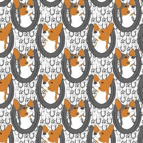 Rat terrier horseshoe portraits