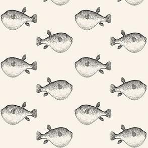 black puffer fish blow fish on cream