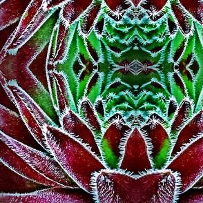 largescale succulent mandalas 1
