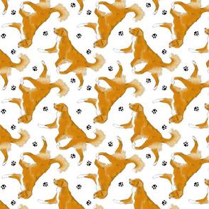 Trotting Nova Scotia duck tolling Retriever and paw prints - white