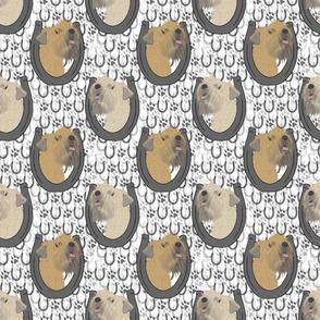 Soft coated Wheaten terrier horseshoe portraits