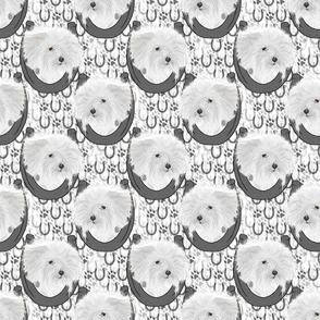 Coton de Tulear horseshoe portraits