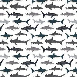 sharks // shark white ocean kids boys shark week animals ocean