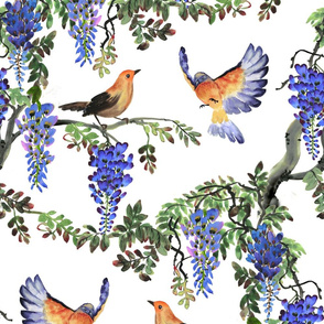 Birds and Wisteria