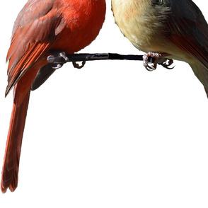 Mr and Mrs Cardinal