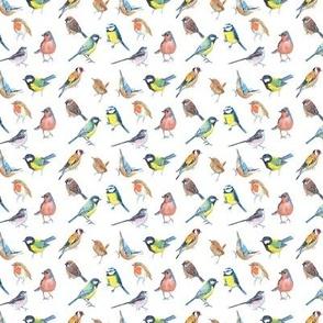 Bright Little British Birds