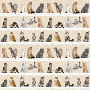 Collectable Cats