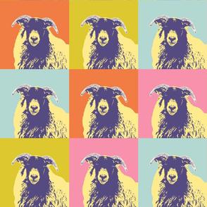 sheep-face-single