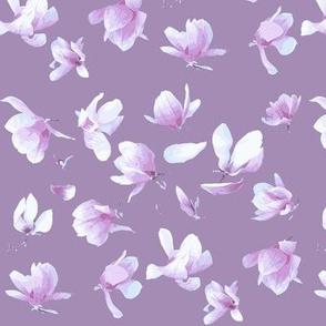 Tulip Magnolia (Purple)