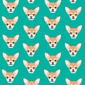 chihuahua dog cute mini dog dog pets cute dog head