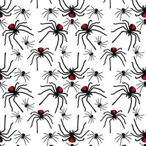 Redback Spider Poison Soup