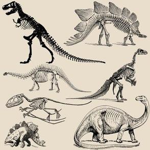 Vintage Museum Skeletons | Dinosaurs on Cream