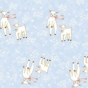 Lambs Blue