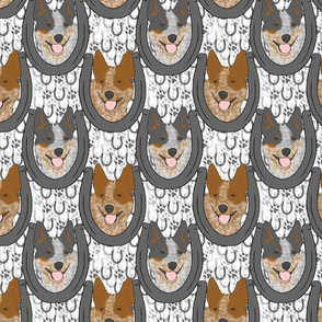 Australian cattle dog horseshoe portraits
