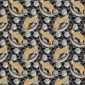 Bobcat in moon portraits