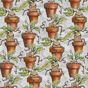 Potted Mandrakes on Grey watercolor