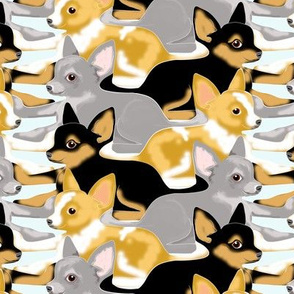 Tessellated Chihuahua Puppies
