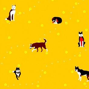 Happy Huskies Yellow