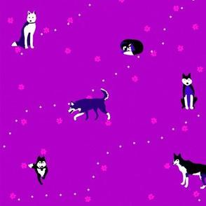 Happy Huskies Purple