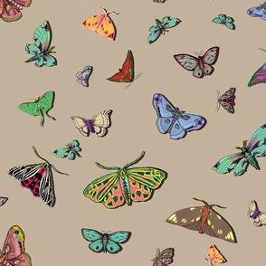 Moths Canvas Large scale