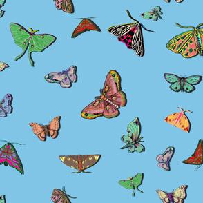 Moths Blue large scale
