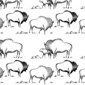 American Bison Sketch
