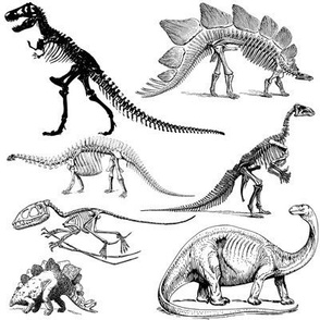 Vintage Museum Skeletons | Dinosaurs on White