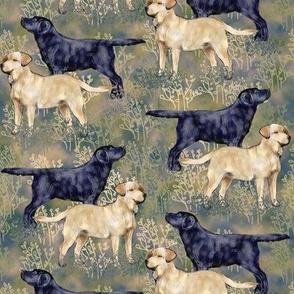 Black and Yellow Labrador Retrievers in Brushy Field