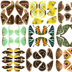 Small Moth Wing Fabric Panel