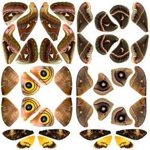 Brown Moth Wing Fabric Panel