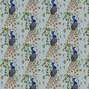 Pfau Purdy Peacock  Pale grey blau